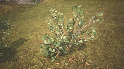 Highland berries.png