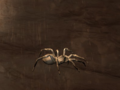 Pet Gray Spider.png