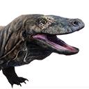 Tamed Komodo
