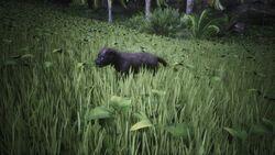 Panther cub 1.jpg