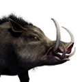 Icon pet Boar Alpha.png