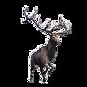 Taxidermied Elk