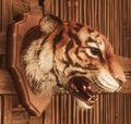 Tiger Head Trophy.jpg