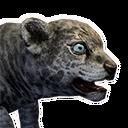 Sabretooth Kitten