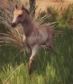 Foal1.png