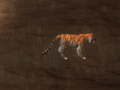 Pet Tiger.png