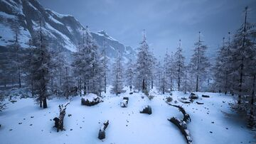 Frostneedleforest1.jpg
