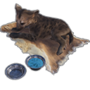 Emberlight pet hyena spotted.png