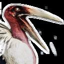Siptah Pelican