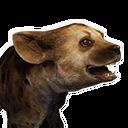 Aardwolf Cub
