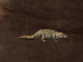Pet Crocodile.png