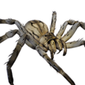 Icon pet Spider Grey.png