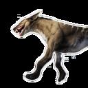 Aardwolf Carcass