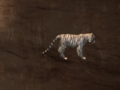 Pet White Tiger.png