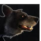 Feral Dog (Variant A)
