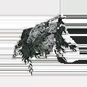 Grey-flower Lupine