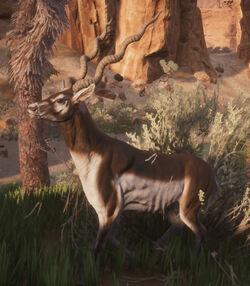 Antelope side.jpg