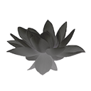Grey Lotus Flower