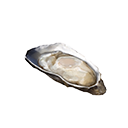 Cooked Oyster