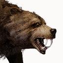 Gezähmter Bär
