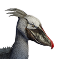 Icon pet JungleBird Grey.png