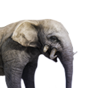 Antediluvian Elephant Calf