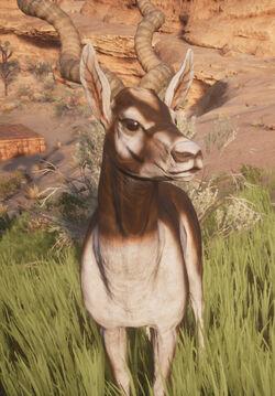 Antelope front.jpg