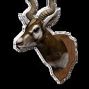 Antelope Head Trophy