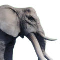 Icon elephant.png