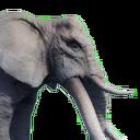 Tamed Elephant