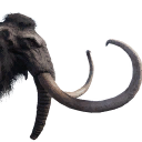 Tamed Mammoth