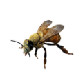 Icon bee worker.png