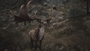 Elk King