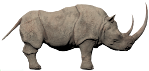 Rhino (white)