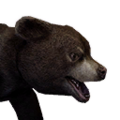 Icon baby Bear.png
