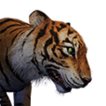 Icon pet Tiger.png