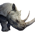 Icon pet RhinoPet White.png