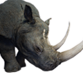Icon pet RhinoGray.png