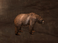 Pet Bear.png