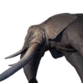 Icon ElephantDead.png