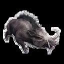 Taxidermied Boar