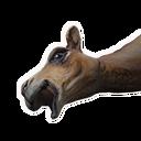 Kamelkadaver