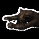 Panther Carcass