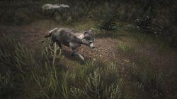 Wolf puppy 1.jpg