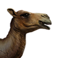 Icon pet Camel.png