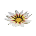 Icon white flower.png
