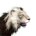 Icon lion albino.png