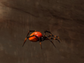 Pet Red Widow.png