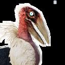 Siptah Pelican Chick