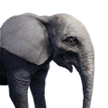 Icon ElephantBaby.png